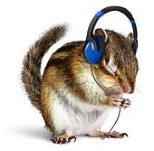Funny chipmunk listening to music on headphones