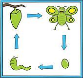 Green butterfly metamorphosis