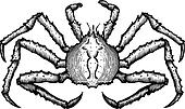 A black and white drawing of a king crab
