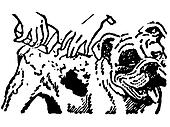 A black and white version of an illustration of a Bulldog having a wash