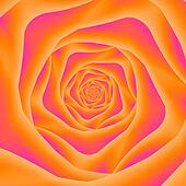 Orange and Pink Rose Spiral