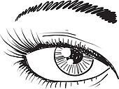 Human eye sketch
