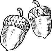 Acorn or buckeye sketch