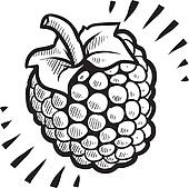 Raspberry fruit sketch