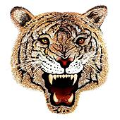 Hand Drawing of Tiger Head Portrait