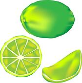 Lime fruit illustration