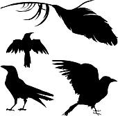 Crow, raven, and feather vector
