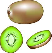 Kiwi fruit illustration