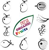 Abstract set of fresh, organic summer fruit icons represented in