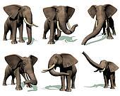 Set of elephants