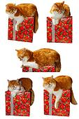 Cat on the gift box