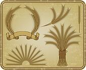 Wheat, a vintage set. Vector illust