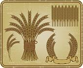Ears of wheat, set. Vector illustra