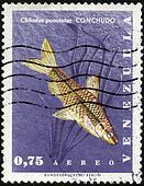 Stamp Conchudo - Chilodus Punctatus