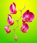 Orchid vector flower illustration. Tropical exotic flower