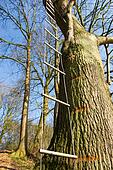 Rope ladder in tree