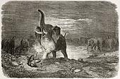 Elephant attacking