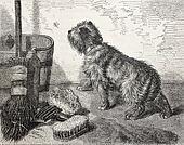 Dog and broom
