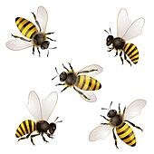Set of bees  isolated on white