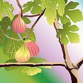 Three Red Figs