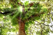 Tree light.