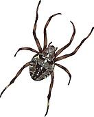 Big spider with cross-shaped drawing on a back.