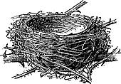 Nest of the Blackcap or Sylvia atricapilla, vintage engraving
