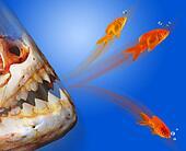 Goldfish Escaping.