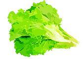 Leaf of lettuce