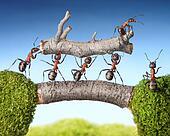 team of ants carry log on bridge, teamwork