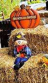 Scarecrow - pumpkin patch