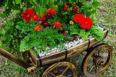 old garden cart with flowers