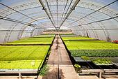 industrial plants cultivation
