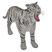 White tiger bullying