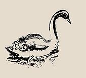 Beautiful Swan Sketch