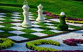 Chess of chrysanthemums