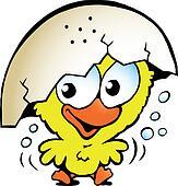unhappy baby chicken