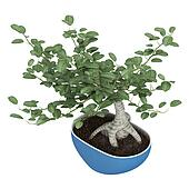 Bonsai tree in a pot