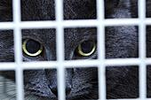 Female cat behind cage door watch grimly