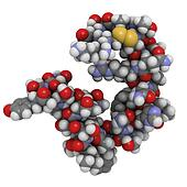 Amylin (Islet Amyloid PolyPeptide, IAPP) protein molecule, chemi