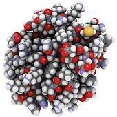 Growth factor receptor-bound protein 10 (Grb10, Grb-IR), chemica