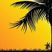 palm tree for background black illustration