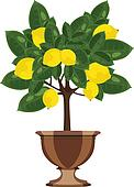 Lemon tree in a flowerpot vector illustration