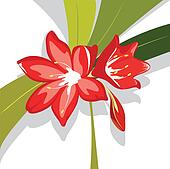 Flower red  Lily vector illustration