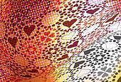 Heart pattern illustration