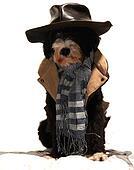 investigator dog