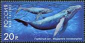 "RUSSIA - CIRCA 2012: A stamp printed in Russia shows Humpback Whale, series ""Fauna of Russia. Whales"", circa 2012"