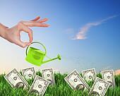 Human hand watering money tree