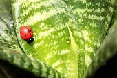 Beautiful ladybird