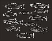 vector set: salmon fishes